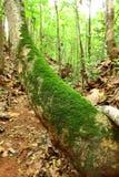 热带气侯条件的森林 免版税库存照片