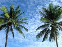 热带气候 库存照片