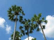 热带气候 免版税库存图片