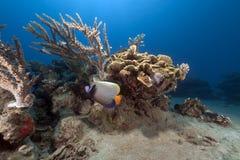 热带水下的寿命在红海。 免版税图库摄影