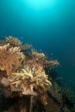 热带水下的寿命在红海。 图库摄影