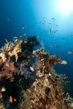 热带水下的寿命在红海。 库存照片
