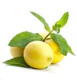 热带水多的柠檬 库存照片