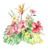 热带水彩花束 库存照片