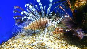 热带水族馆五颜六色的鱼 库存照片