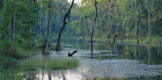热带池塘在Chitwan在尼泊尔 免版税图库摄影
