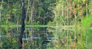热带池塘在Chitwan在尼泊尔 库存图片