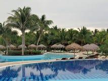 热带池的手段 库存照片