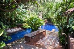 热带池的游泳 库存图片