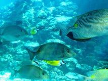 热带汤斯维尔海洋生物  免版税图库摄影