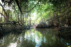 热带河和美洲红树雨林由太阳点燃了 免版税库存照片