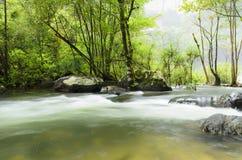 热带河在密林 免版税库存图片