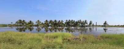 热带沼泽地 图库摄影