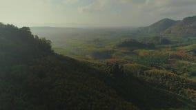 热带泰国cheo lan长的国家公园密林日落寄生虫飞行、狂放的山自然树和棕榈 影视素材