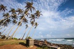 热带海、棕榈树和天空 斯里兰卡印度洋 免版税库存照片