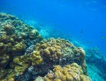 热带海和珊瑚礁水下的风景 免版税库存照片