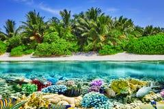 热带海岛和水下的世界在马尔代夫 库存图片