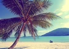 热带海岛棕榈树天堂海滩假日概念 库存照片
