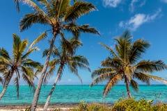热带海岛棕榈树 免版税库存图片