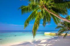 热带海岛用沙滩、棕榈树和tourquise清楚的水 库存照片