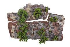热带海岛顶视图概念 在橡树的吠声片断绿色青苔增长 库存照片