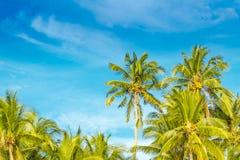 热带海岛,在天空背景的棕榈树 免版税库存图片