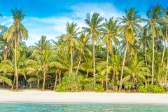 热带海岛,在天空背景的棕榈树 库存图片