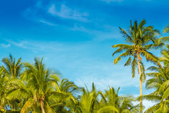 热带海岛,在天空背景的棕榈树 库存照片