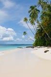 热带海岛-海运、天空和棕榈树 库存照片