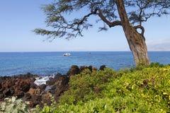 热带海岸大的结构树 免版税库存图片