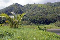 热带海岸的雨林 库存照片
