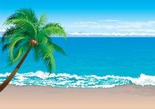 热带海岸 皇族释放例证