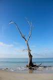 热带海滩停止的结构树 库存图片