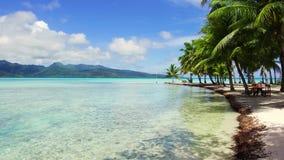 热带海滩在法属波利尼西亚 股票录像