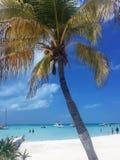 热带海滩天堂, Isla Mujeres,墨西哥 库存照片