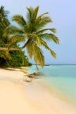 热带海滩弯曲的棕榈树 免版税库存图片