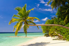 热带海滩弯曲的棕榈树 图库摄影