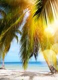 热带海滩的夏天 免版税库存图片