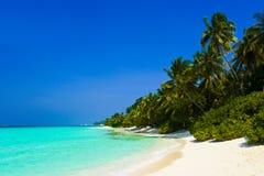 热带海滩的密林 库存照片