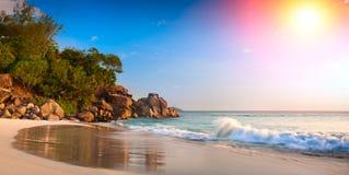 热带海滩的掌上型计算机 棕榈树叶子在太阳光的 假日旅行卡片的自然本底 定调子 库存照片