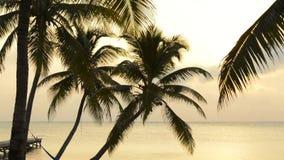 热带海滩的日出 股票录像