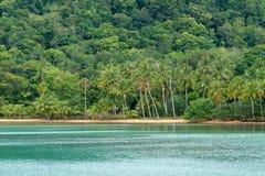 热带海滩的森林 免版税图库摄影