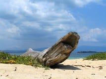 热带海滩的漂流木头 免版税库存图片