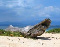 热带海滩的漂流木头 免版税库存照片