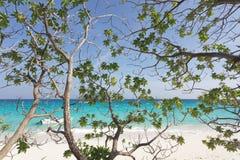 热带海滩的结构树 免版税库存图片