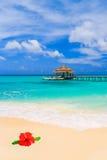 热带海滩的花 库存照片