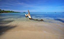 热带海滩老断枝的浪潮 库存照片