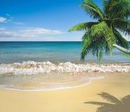 热带海滩金黄的沙子 免版税库存照片