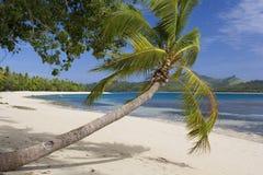 热带海滩-斐济-南太平洋 免版税库存图片