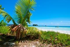 热带海滩 库存图片